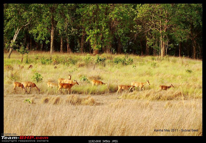 Adventure in Kipling Country - Kanha National Park-kanha-may-201131-1280x768.jpg