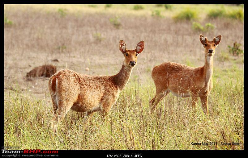 Adventure in Kipling Country - Kanha National Park-kanha-may-201133-1280x768.jpg