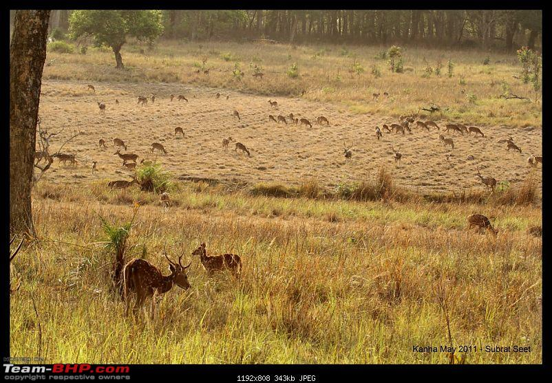 Adventure in Kipling Country - Kanha National Park-kanha-may-201140-1280x768.jpg