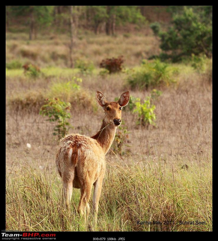 Adventure in Kipling Country - Kanha National Park-kanha-may-201134-1280x768.jpg