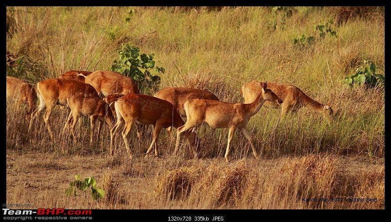 Adventure in Kipling Country - Kanha National Park-kanha-may-201142-1280x768.jpg