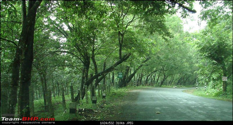 The road truly  less traveled in trail of the monsoon : Ambanad Estate Sojourn*-dsc07553.jpg