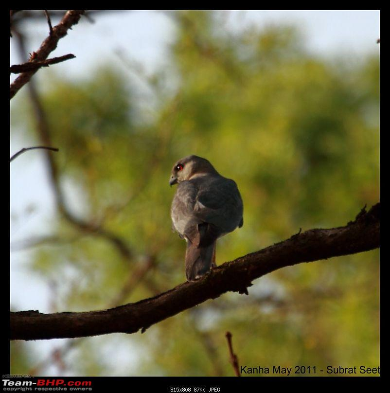 Adventure in Kipling Country - Kanha National Park-kanha-may-201153-1280x768.jpg