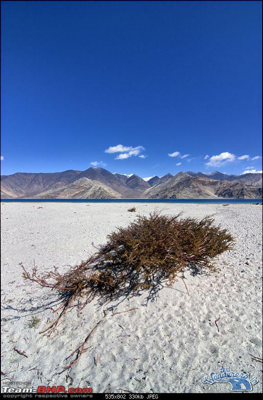 """Self-Drive Expedition Travel-Ladakh and cold desert Changthang in """"off-season"""" Oct 10-img_4464.jpg"""