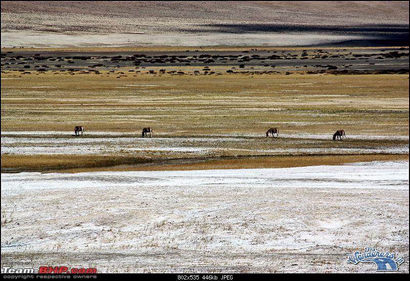 "Self-Drive Expedition Travel-Ladakh and cold desert Changthang in ""off-season"" Oct 10-img_4636.jpg"