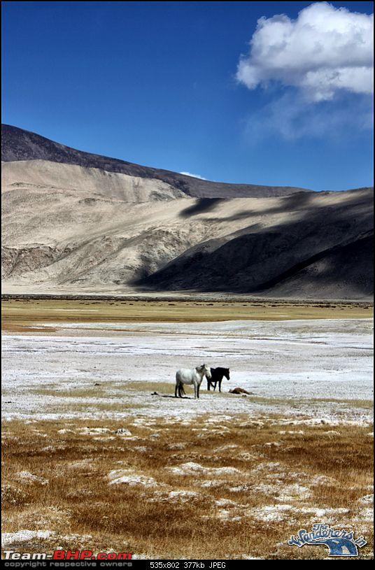 """Self-Drive Expedition Travel-Ladakh and cold desert Changthang in """"off-season"""" Oct 10-img_4642.jpg"""