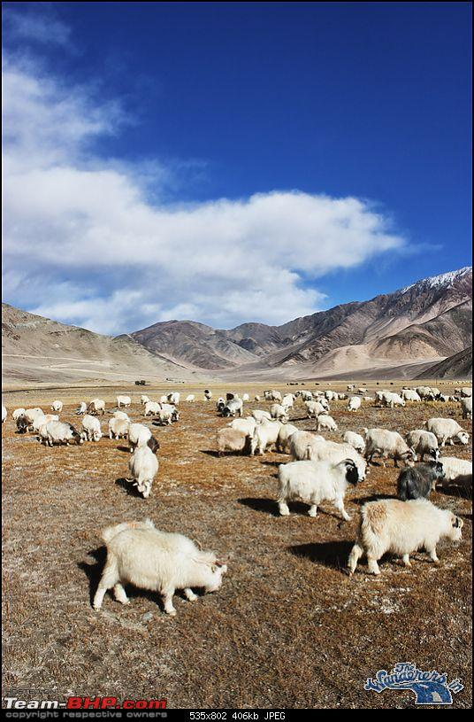 "Self-Drive Expedition Travel-Ladakh and cold desert Changthang in ""off-season"" Oct 10-img_4834.jpg"