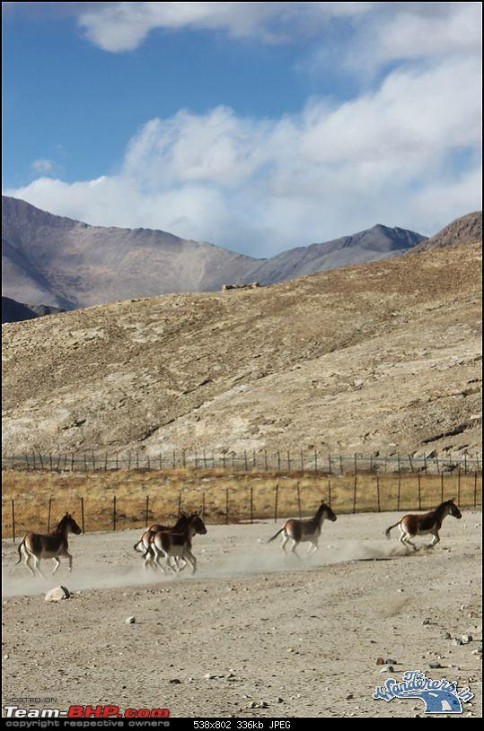 """Self-Drive Expedition Travel-Ladakh and cold desert Changthang in """"off-season"""" Oct 10-img_4864.jpg"""