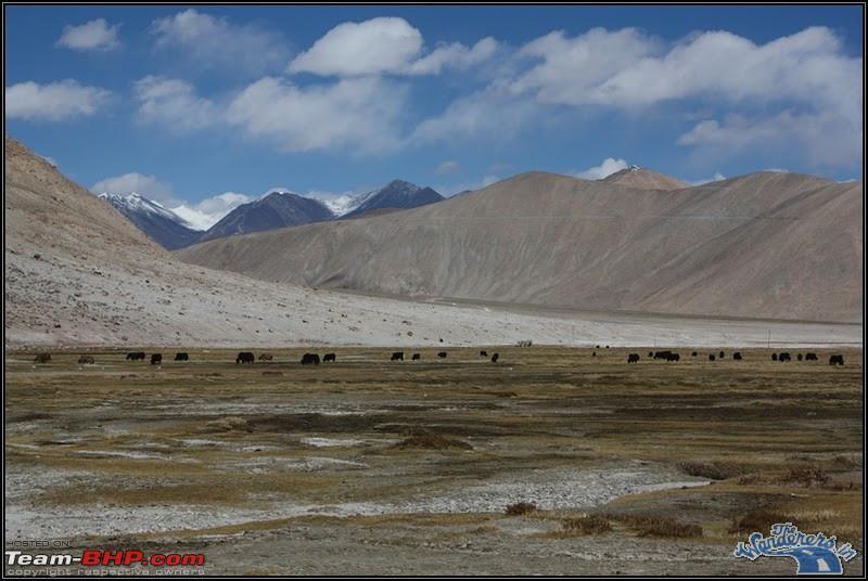 Name:  Ladakh Changthang124.jpg Views: 1407 Size:  116.6 KB