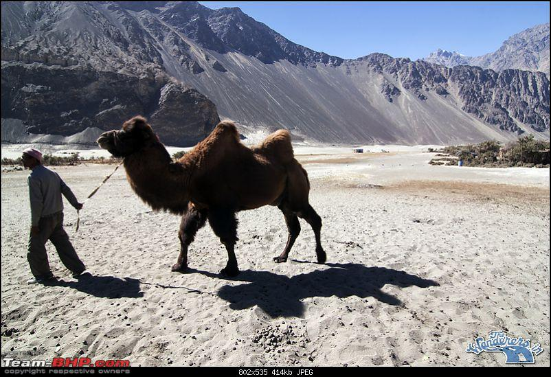 """Self-Drive Expedition Travel-Ladakh and cold desert Changthang in """"off-season"""" Oct 10-img_5613.jpg"""
