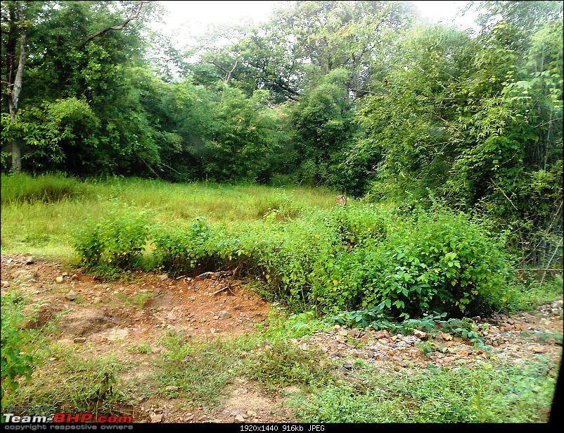 Tadoba Andhari Tiger Reserve-05102008086.jpg