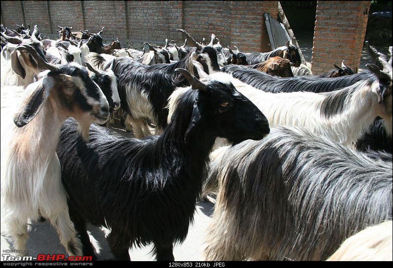 Kashmir : Nature's bewitching drama !!-img_0385.jpg