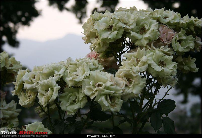 Kashmir : Nature's bewitching drama !!-img_0297.jpg