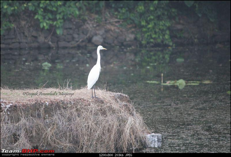 Mumbai to Vittal - A roadtrip-egret-desktop-resolution.jpg