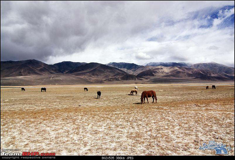 """Self-Drive Expedition Travel-Ladakh and cold desert Changthang in """"off-season"""" Oct 10-img_6417.jpg"""