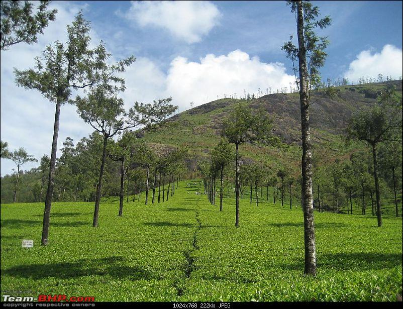 Yet another visit to God's Own Country - MUNNAR!!!-img_4450.jpg