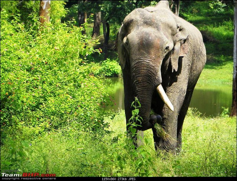 Operation Tiger: Wayanad-elephants-road2.jpg