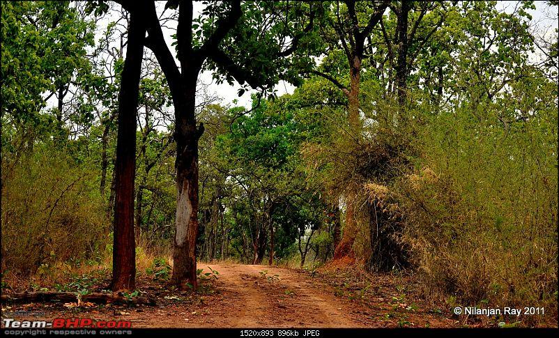 Call of the Wild: A 3500 km roadtrip to Pench, Bandhavgarh and Kanha in a Fortuner-dsc_6590.jpg