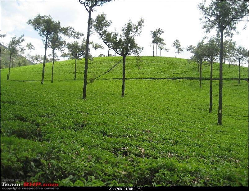 Yet another visit to God's Own Country - MUNNAR!!!-img_4590.jpg
