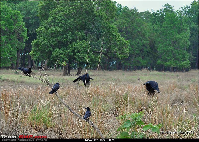 Call of the Wild: A 3500 km roadtrip to Pench, Bandhavgarh and Kanha in a Fortuner-dsc_6915.jpg