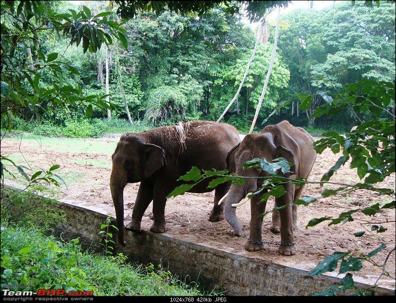 My Sojourn - Chennai to Wayanad via Mysore-dsc01128.jpg
