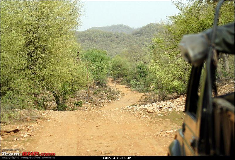 Sariska Tiger Reserve - Land of Tigers? Quick getaway from Gurgaon-sariska-landscape-pervious-visit.jpg