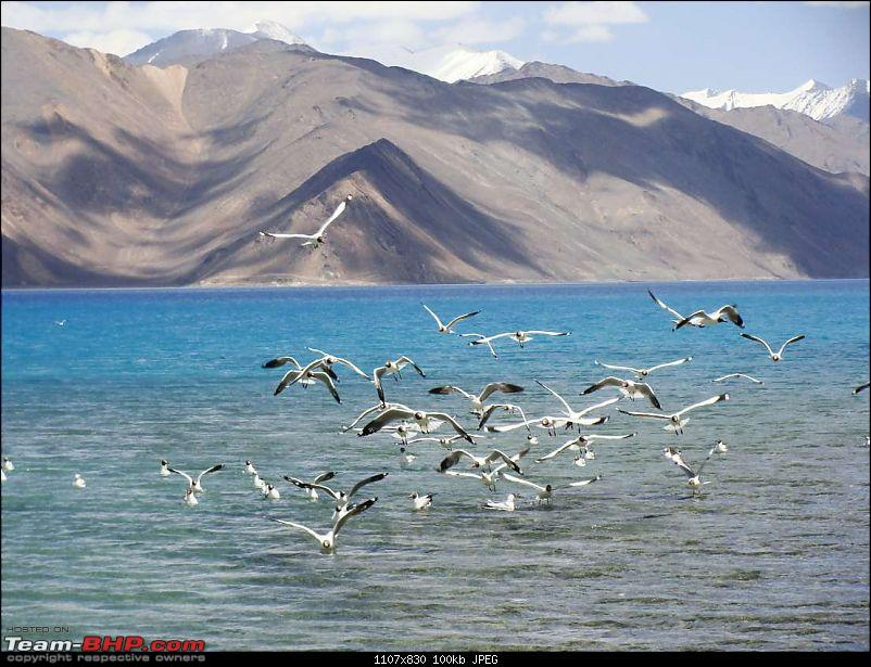 Hawk-On-Fours� (H-4�) Roadtrip:  Leh(t)'s go to Ladakh & Srinagar with QuickSilver.-pangong-13k100.jpg