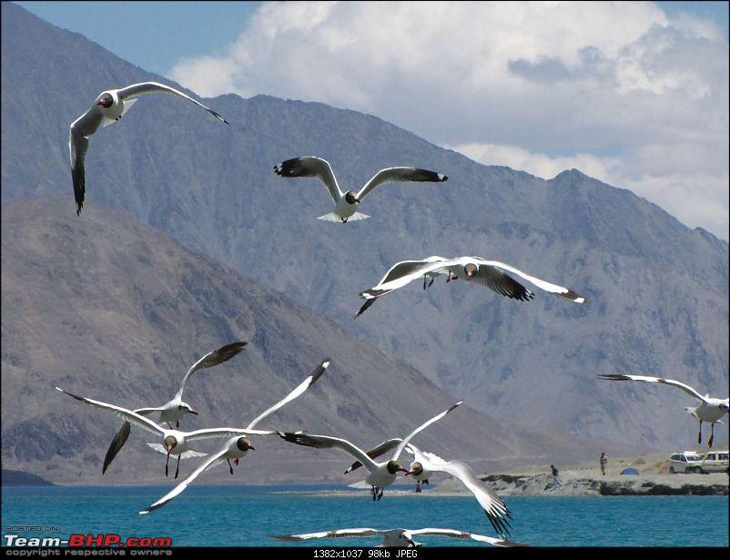 Hawk-On-Fours� (H-4�) Roadtrip:  Leh(t)'s go to Ladakh & Srinagar with QuickSilver.-pangong-16k100.jpg
