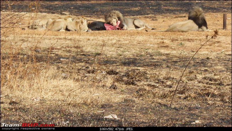 Today will be remembered as the day I played with lions :)-img_0538.jpg