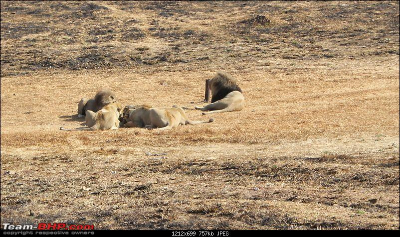Today will be remembered as the day I played with lions :)-img_0539.jpg