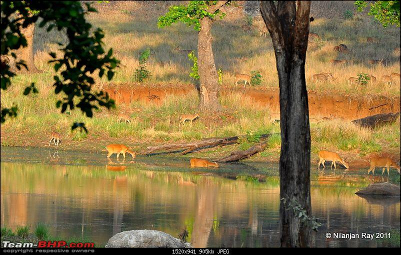 Call of the Wild: A 3500 km roadtrip to Pench, Bandhavgarh and Kanha in a Fortuner-dsc_7190.jpg