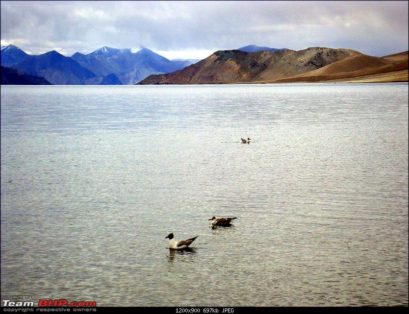 Fauji's Drivologues : Magical Mountainscapes - A Pictorial ode to Ladakh!-dsc00300.jpg