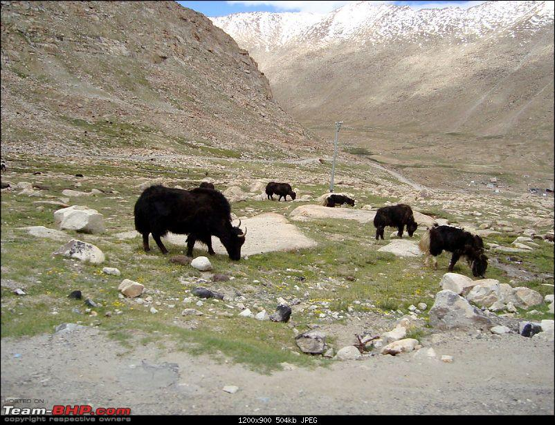 Fauji's Drivologues : Magical Mountainscapes - A Pictorial ode to Ladakh!-dsc00360.jpg