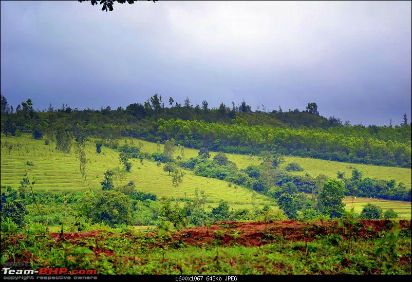 Fauji's Drivologues - Mesmerised in Malnad again! -Amidst Misty meadows of Sakleshpur-dsc_0734-ppp.jpg