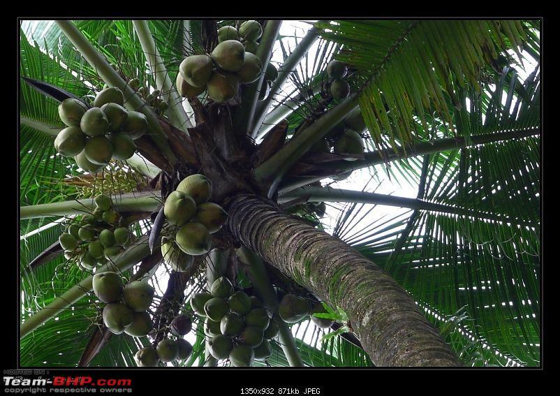 2011 Monsoon Trips : Romancing the rains. Postcards from the Konkan & deccan plateau-p1030670.jpg