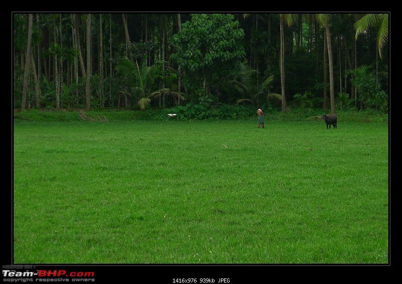 2011 Monsoon Trips : Romancing the rains. Postcards from the Konkan & deccan plateau-p1030690.jpg