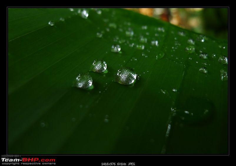 2011 Monsoon Trips : Romancing the rains. Postcards from the Konkan & deccan plateau-p1030717.jpg