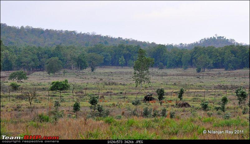 Call of the Wild: A 3500 km roadtrip to Pench, Bandhavgarh and Kanha in a Fortuner-dsc_6817.jpg
