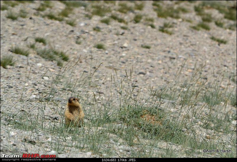 Ladakh & Zanskar: The road(s) less travelled-dsc_0383f.jpg