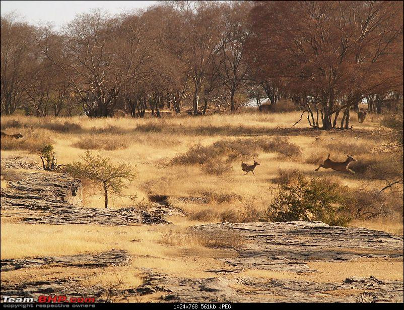 Gurgaon - Ranthambhore - Jodhpur - Gurgaon: Big Cats call again..!-2281383799_aa518e26ba_b.jpg