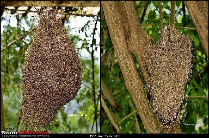 An Incredible Roadtrip to Trivandrum, Velankanni and Mesmerizing Munnar!-22-birds_nest.jpg</a><br /> <br /> <a href=