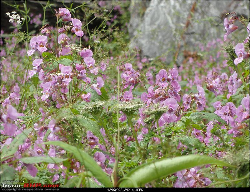 Soaking in the freshness in the midst of a blossoming Valley of flowers and Badrinath-dsc01034.jpg