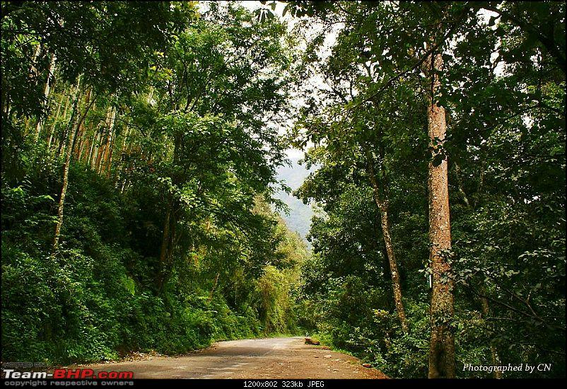 An Incredible Roadtrip to Trivandrum, Velankanni and Mesmerizing Munnar!-4-highway_is_through_dense_forest.jpg