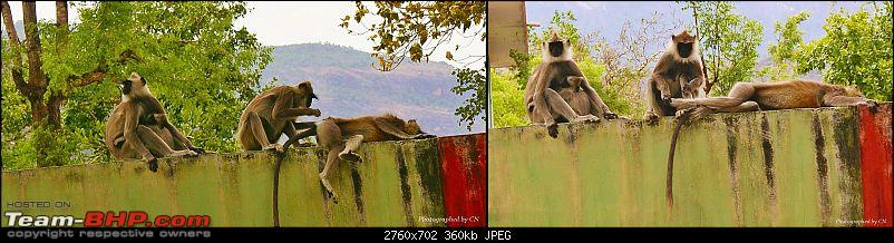 An Incredible Roadtrip to Trivandrum, Velankanni and Mesmerizing Munnar!-14-langurs_grooming_each_other.jpg