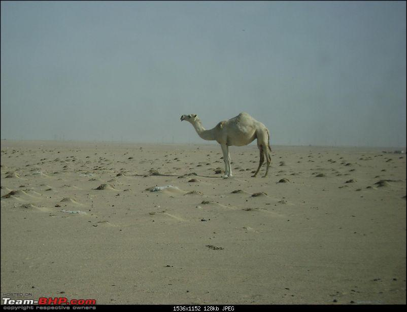 An Eid Day Trip to Wafra, Kuwait-dsc02090.jpg