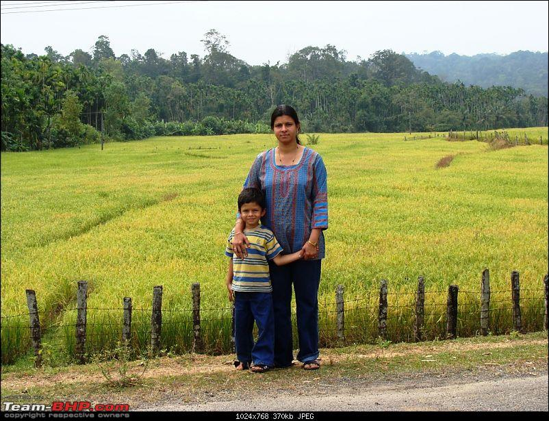 Fun & Frolic with Family: A Sojourn at Vihangama-rice-field.jpg