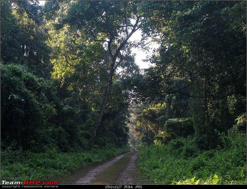 Ikon 1.6 with weak clutch takes us to Darjeeling and a few forests of North Bengal.-picture5.jpg