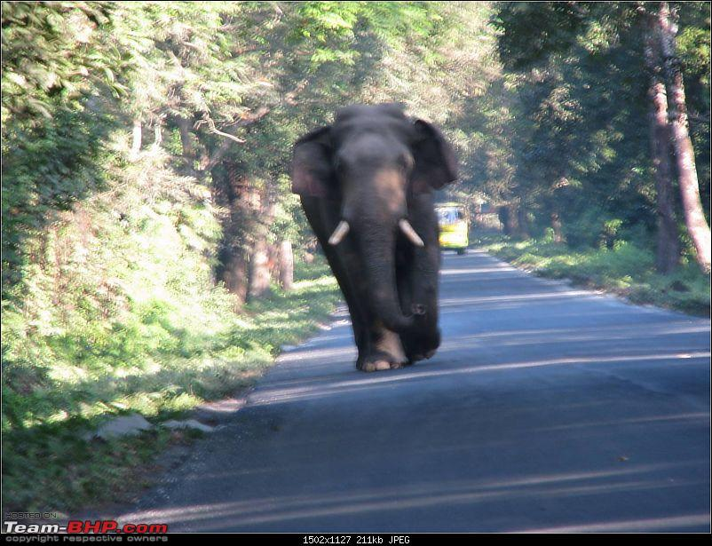 Ikon 1.6 with weak clutch takes us to Darjeeling and a few forests of North Bengal.-picture15.jpg