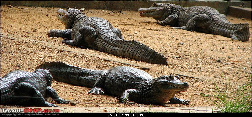 One day trips - Visiting Bannerghatta Zoo & Safari.-pit.jpg
