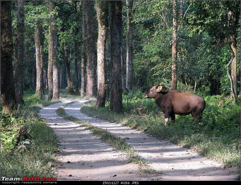 Ikon 1.6 with weak clutch takes us to Darjeeling and a few forests of North Bengal.-picture11.jpg